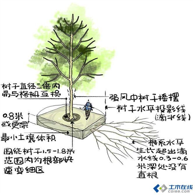 图03 树木地下结构示意图.