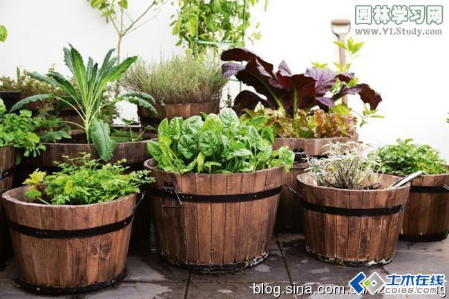 屋顶花园植物种植方式图片http://bbsfile.co188.