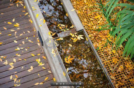 014-Rain-Garden-UpS-472x311.jpg