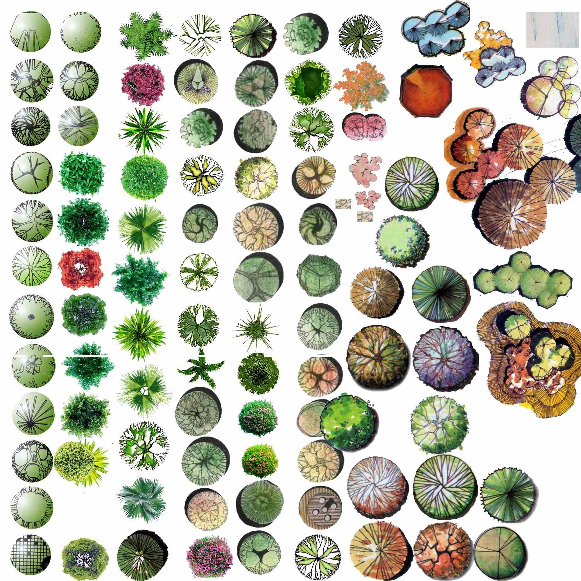 下载的PS植物平面图