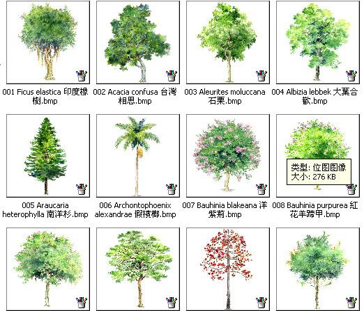 手绘园林植物立面图百例,带名称(更新完)图片1