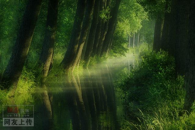 【ps素材】大片绿地树背景(远景配景素材)