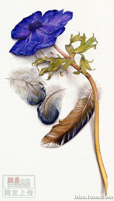 精美的花卉工笔画 保证你喜欢