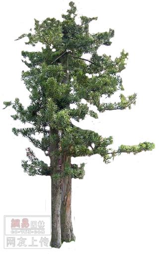 【ps素材】★★我做的树木素材(立面psd格式的)
