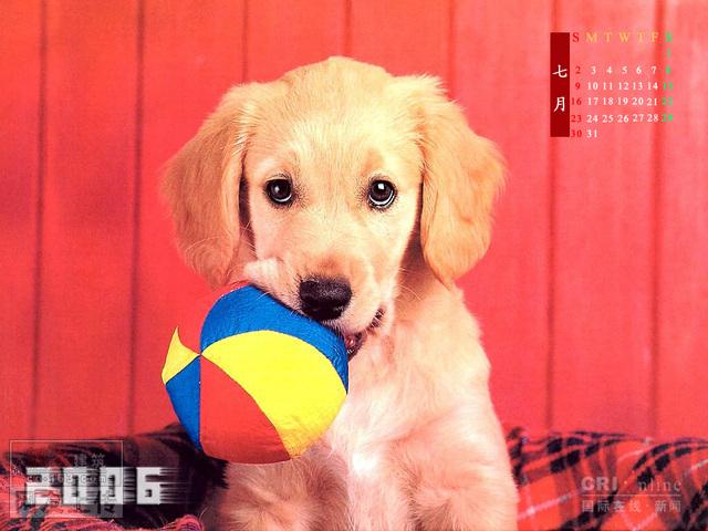 征集宠物狗名字,如有建议品种与相片也可 土木-宠物狗名字大全 宠物