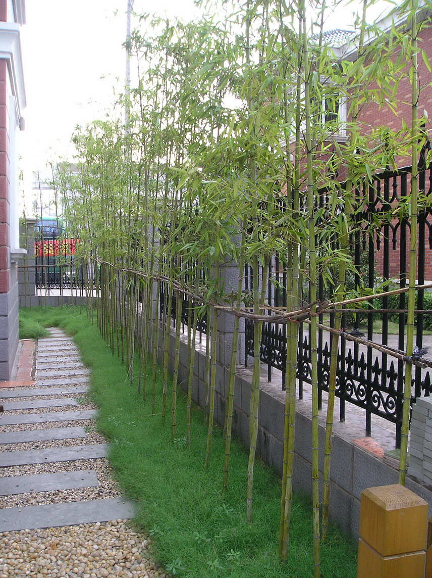 园林绿化 原创精华 上海逸园(自己设计施工的小庭院花园实景)