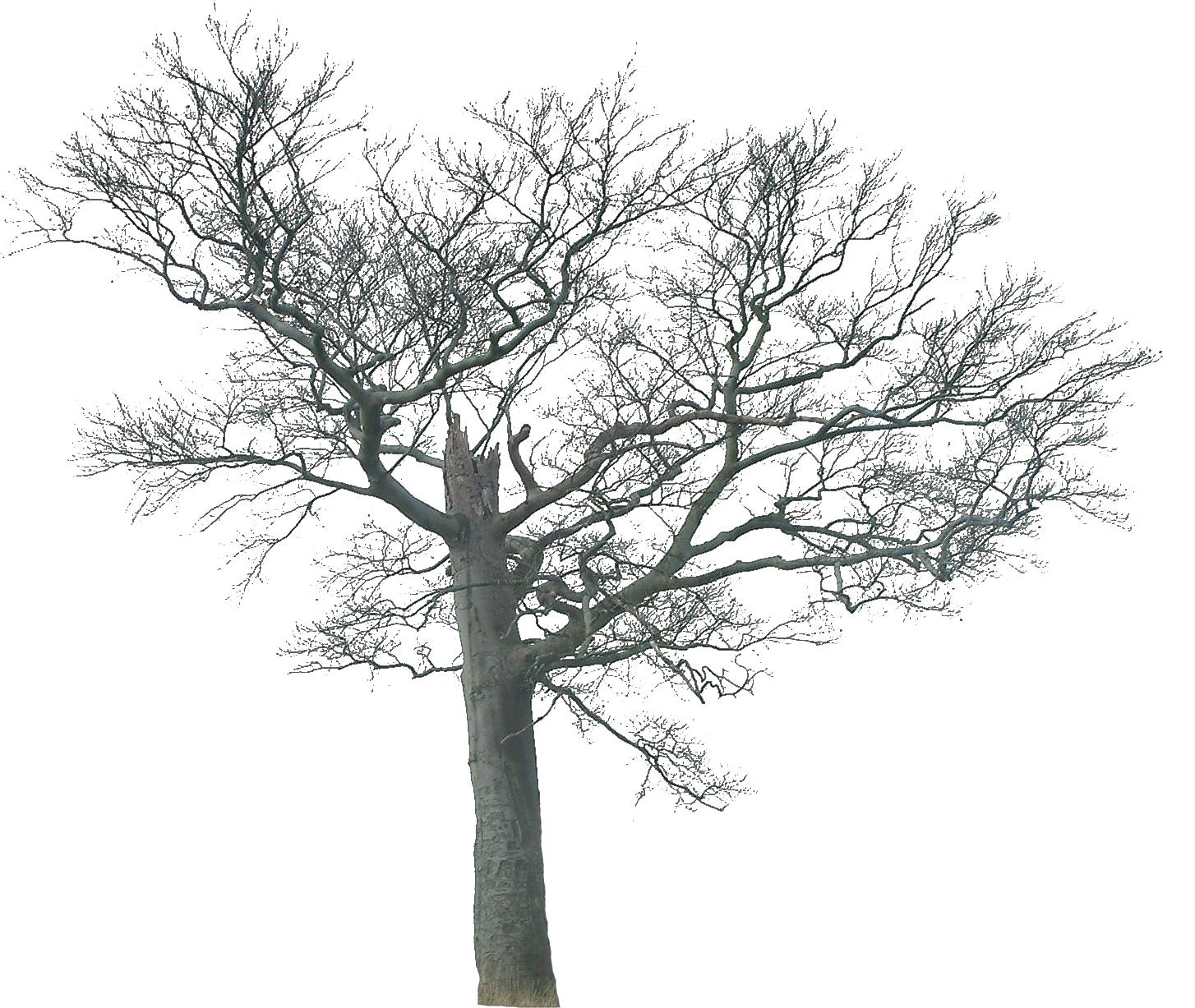 【ps素材】大家来贴树的素材[奖分]