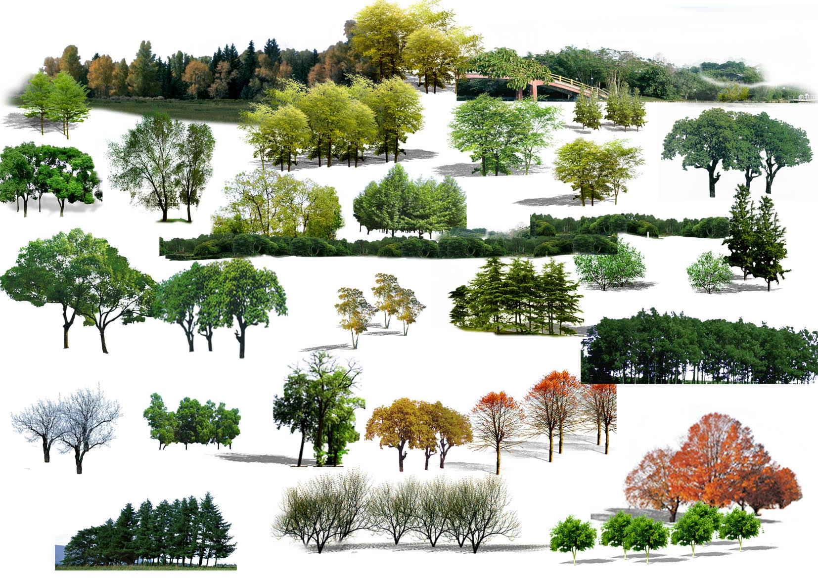 大树树干树枝ps素材