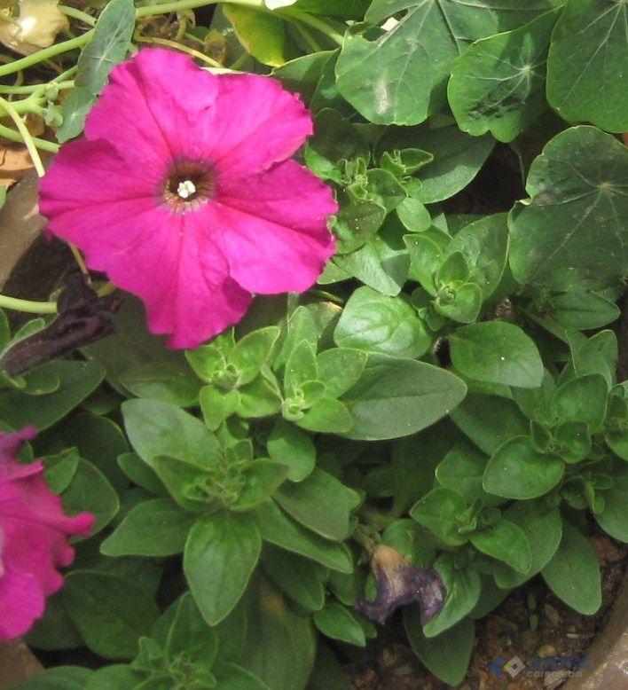 园林常见花卉