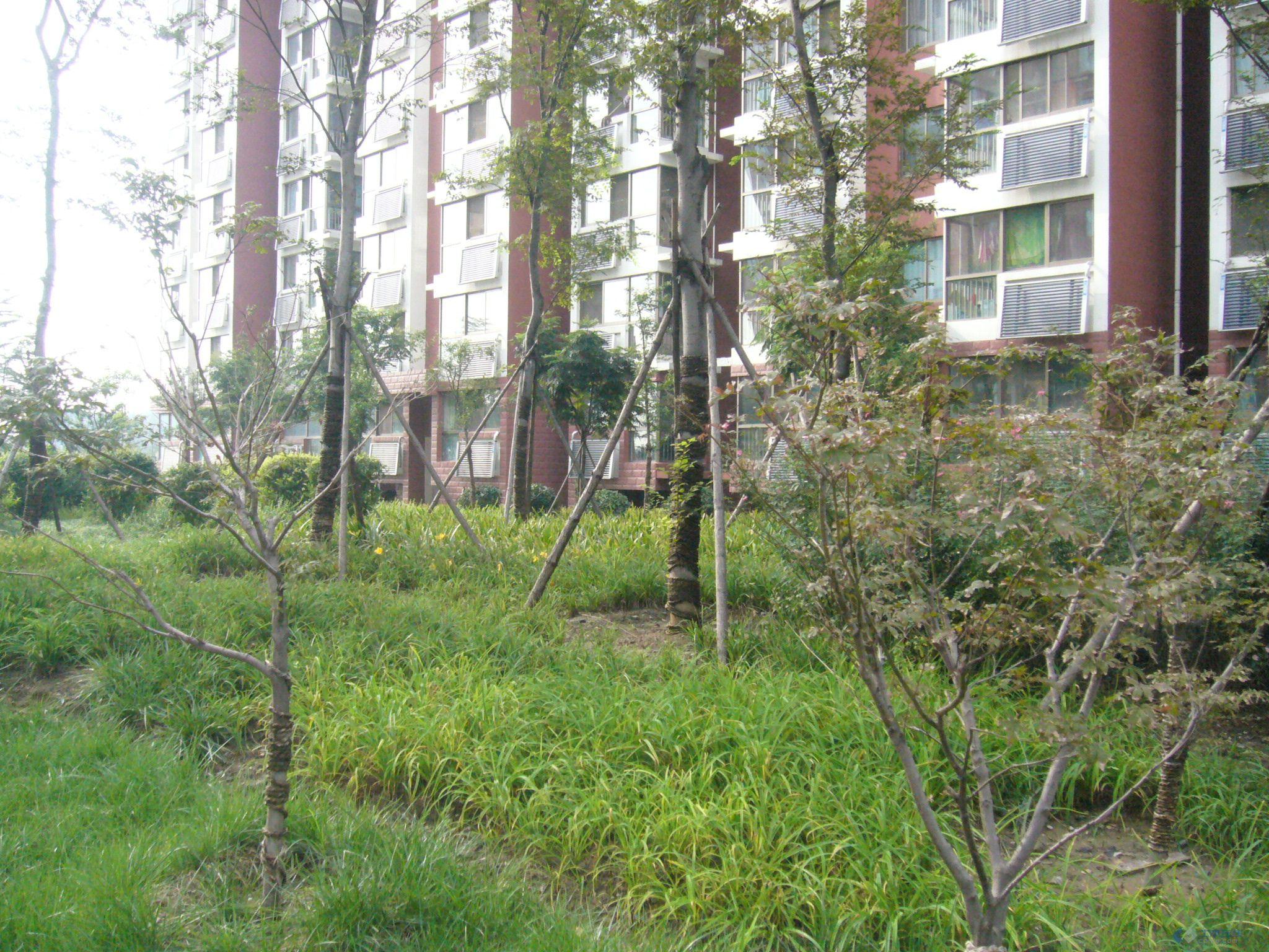 山东一住宅小区园林实景