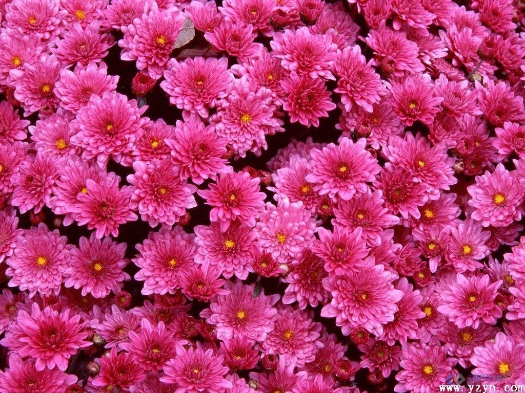 几种花的的英语名字和我搜集的一些花的图片