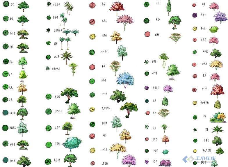 手绘植物平面图画法
