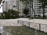 """【环保学院】台风过后垃圾遍地 """"山竹""""替海洋吹回""""垃圾山""""还给人类!_图1"""