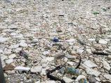 """【环保学院】台风过后垃圾遍地 """"山竹""""替海洋吹回""""垃圾山""""还给人类!_图2"""