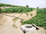 水土保持农业技术——集雨灌溉_图2